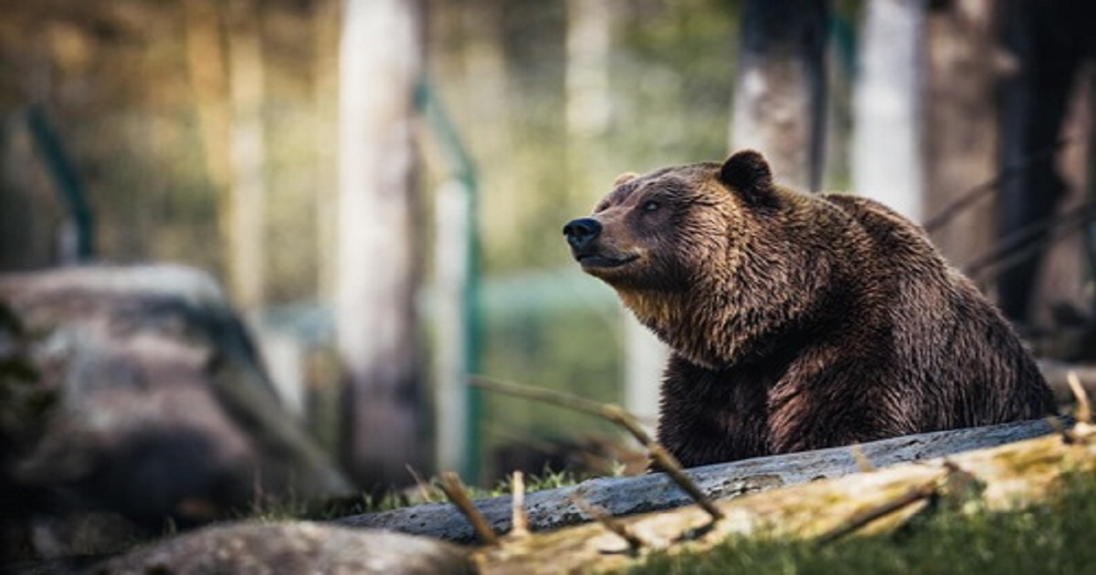 THE GRIZZLY BEAR STRATEGY: HOW TO ALIGN YOUR DEMAND MARKETING AND ABM PROGRAMS